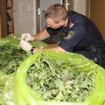 Zwangsversteigerung inklusive Marihuana-Plantage