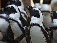 Zoo in Sofia wird nach Tiersterben geschlossen