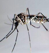6.000 Infektionen nach Denguefieber-Ausbruch