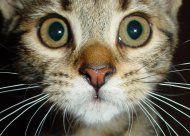 Helfer befreien 150 Katzen aus verwahrlostem Haus