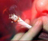Drei Tonnen Marihuana in Antwerpen sichergestellt