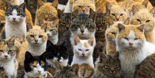 Katzeninsel Aoshima: In diesem Dorf haben Vierbeiner das Sagen