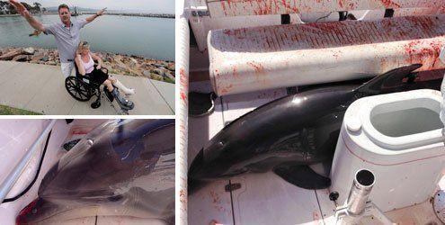 """""""Alles war voller Blut"""": Delfin bricht Frau auf Boot Knöchel"""