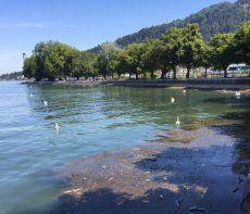 Müll schwimmt im Bodensee
