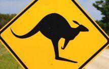 Flugzeug kollidierte in Australien mit Känguru