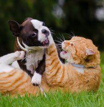 Katzen dürfen streunen