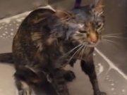 """""""No more"""": Katze spricht mit Besitzer"""