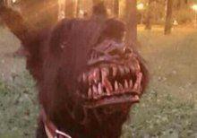"Kurios: Russe entwirft ""Werwolf""-Maulkorb"