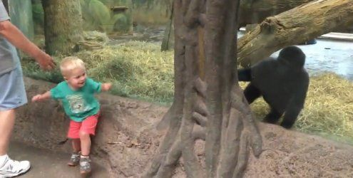 Gorilla spielt Verstecken mit einem Baby
