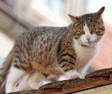Zeugenaufruf: Katze mit Schreckschusswaffe verletzt