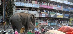 Wilder Elefant demolierte Häuser und Autos in indischer Stadt