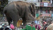 Elefant läuft Amok in indischer Stadt Siliguri