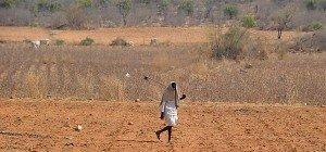 Tote bei mehr als 900 Waldbränden im Norden Indiens
