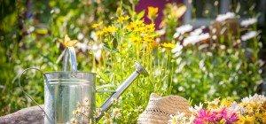 Garten- und Gesundheitstag 2016 – Lauterach blüht auf