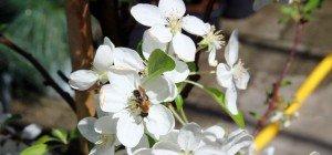 Frühe Blüte und kaltes Wetter im VOL.AT-Gartentipp
