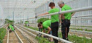 Oststeirisches Mega-Glashaus: Erste Ernte Ende Juni geplant