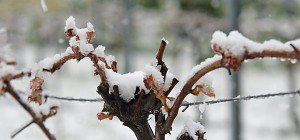 Frostschäden derzeit zwischen 215 und 240 Mio. Euro