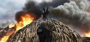 Kenia verbrannte mehr als hundert Tonnen Elfenbein
