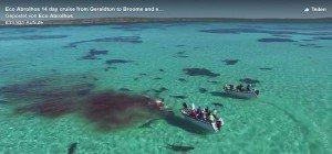 Shark Bay: 70 Haie stürzen sich in Australien auf Walkadaver