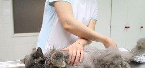 Zwei Katzen beim WTV ausgesetzt: Tierärzte kämpfen um Lisas Leben