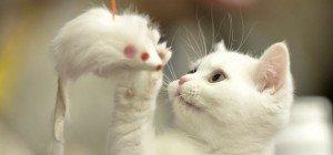 Süße Katzen-Babys aus dem Netz