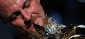 """Sweepee Rambo gewann Titel als """"hässlichster Hund der Welt"""""""