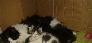 Katzenmama in Hard vermisst