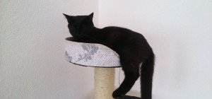Katze Ziva in Nenzing vermisst!!