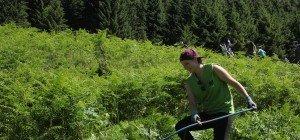 Einsatz der Vielfalter auf der Alp Gavar in Innerbraz