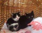 Kätzchen suchen das richtige Zuhause