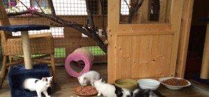 Schönes Zuhause für Kätzchen gesucht