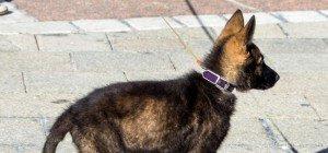 Anklage: Tierquälerei und Betrug mit Welpen