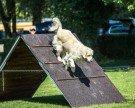 Hundeturnier in Neu Amerika