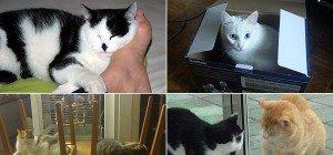 Das sind Vorarlbergs Katzen – User zeigen uns ihre Lieblinge