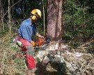 Forstkurse für Hobbyholzer