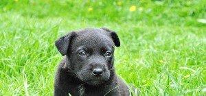 Illegaler Handel mit Hundewelpen: Wiener zeigt 37-jährige Slowakin an
