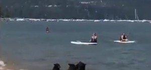 Einfach zu heiß: Bären Familie macht Ausflug zum Strand