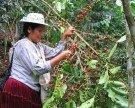Weltläden stärken KaffeeproduzentInnen im globalen Süden