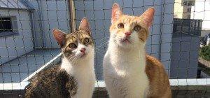 Ein Fall für die Katzenflüsterin: Katzen-Dauerstreit in Dachterrassenwohnung
