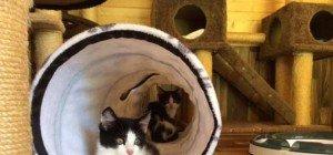 Kätzchen suchen ihr Zuhause