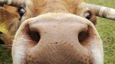 Bio-Landwirtschaft: Österreich Spitzenreiter