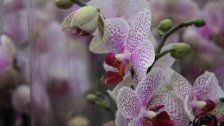 Die Orchidee im VOL.AT-Gartentipp