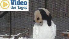 Panda vs. Schneemann