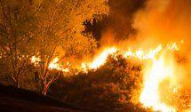 Waldbrand in Neuseeland wütet weiter