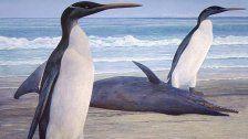 61 Mio. Jahre alt: Fossiler Riesenpinguin entdeckt