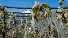 Land unterstützt frostgeplagte Obstbauern
