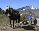 Arbeitspferde übernahmen Holztransport