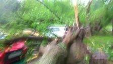 Elf Menschen in Moskau von Bäumen erschlagen