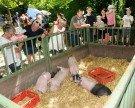 Tolles Tierfest auf Luisl's Farm