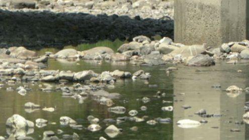 Die Hitzewelle fordert ihren Tribut: Erste Flüsse trocknen aus